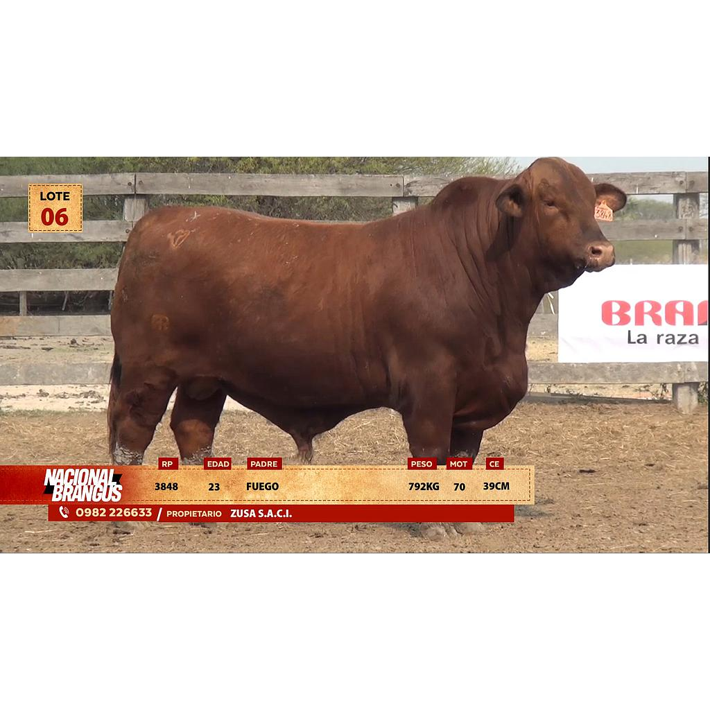 Auction For Nacional Brangus a Campo - Lote 06 - Precio de Cuota por animal por 12